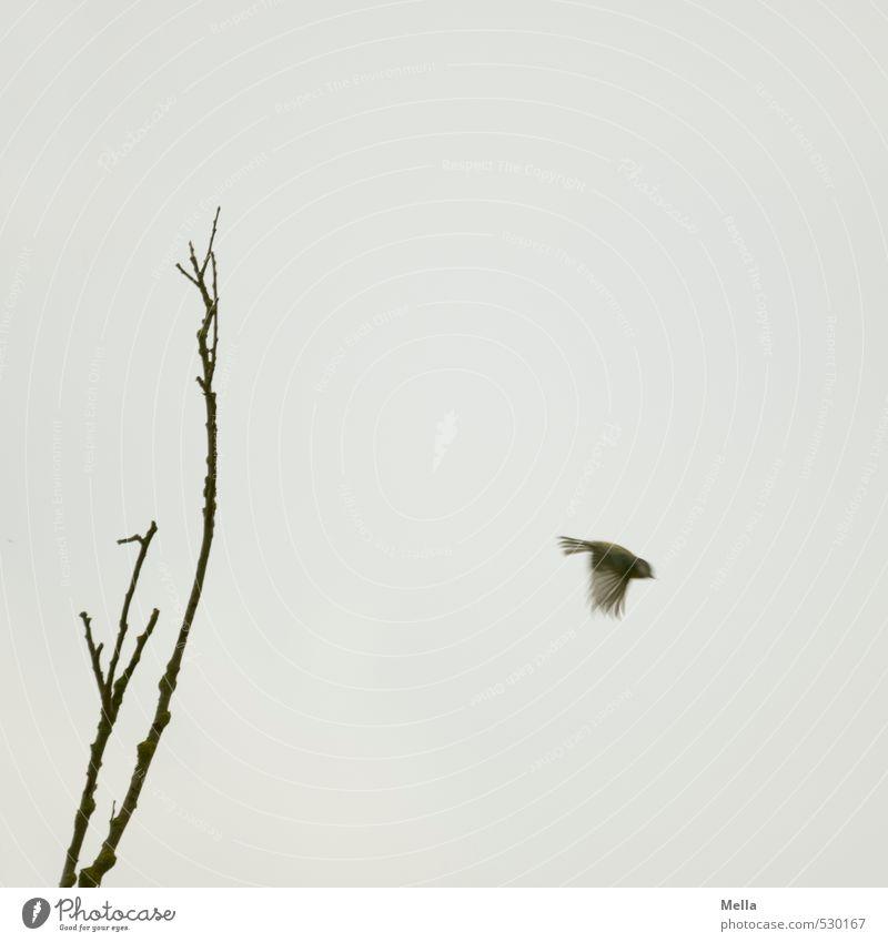 Flieg! Umwelt Natur Luft Pflanze Baum Ast Tier Wildtier Vogel Meisen 1 Bewegung fliegen klein natürlich trist grau Freiheit trüb einzeln Farbfoto Außenaufnahme
