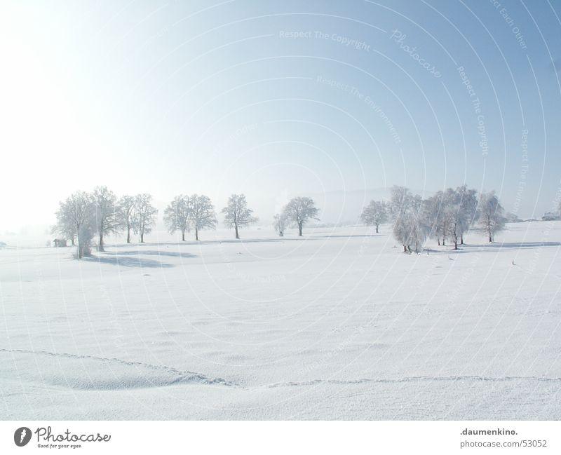 Ältestenrat Baum Wald kalt Winter Mensch weiß Jahreszeiten ruhig Bündnis Symbole & Metaphern Licht Himmel Detailaufnahme Ast Schnee Sonne Fantasygeschichte hell