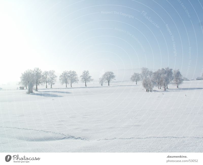 Ältestenrat Mensch Natur alt Himmel weiß Baum Sonne blau Winter ruhig Wald kalt Schnee Landschaft hell Wetter