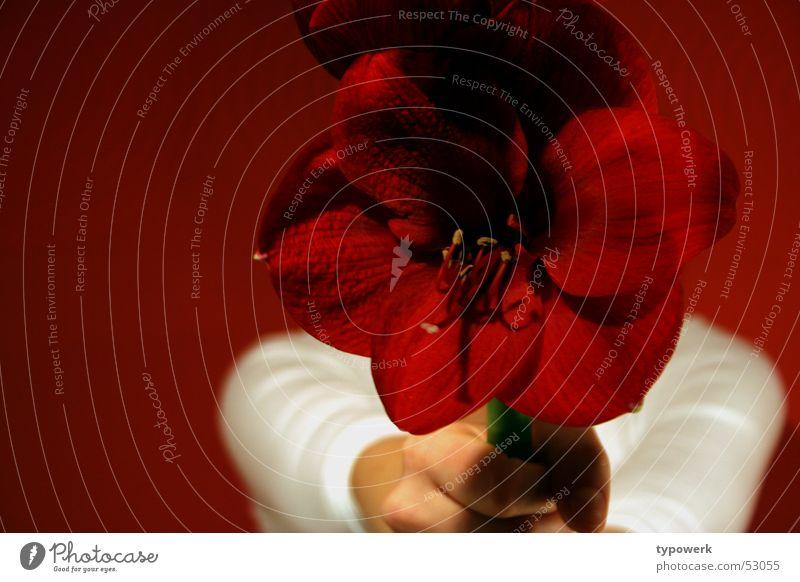 Nur für Dich ... (Teil 2) Hand weiß Blume rot Freude Geburtstag Geschenk Jeanshose Tapete Stengel festhalten geben Jubiläum schenken