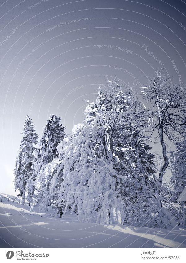 Unberührt. weiß Baum Winter kalt Frost Monochrom Thüringen Thüringer Wald
