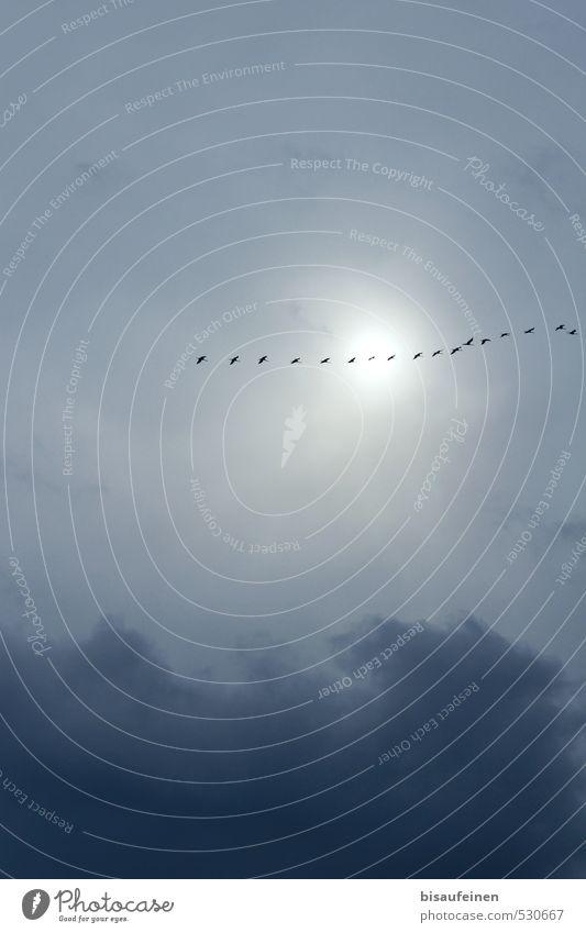 Happy Birthday PC! Zugvögel auf dem Weg zur Party... Himmel Natur Ferien & Urlaub & Reisen blau Sonne Wolken Tier Ferne Herbst grau Freiheit fliegen Vogel frei