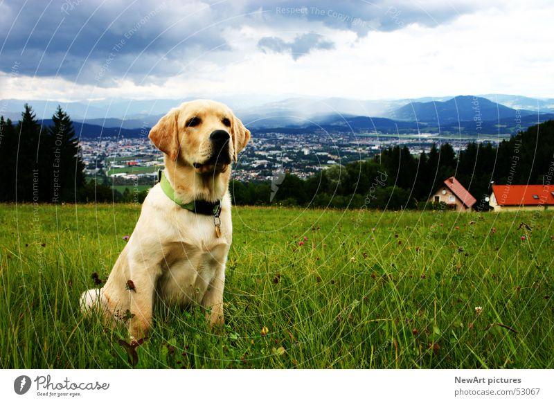 Hund Hund Himmel Natur blau Tier Wolken Haus Landschaft Wiese Gras sitzen Ohr Pfote beige Maul Halsband