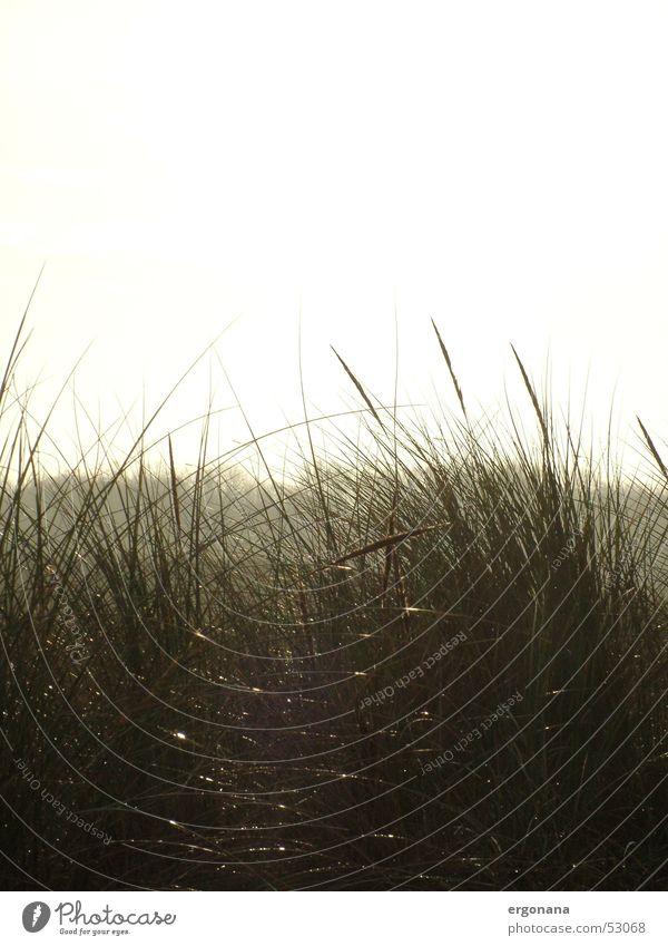 Sommerabend Meer Sommer Strand Gras Romantik Stranddüne Abendsonne Sommerabend