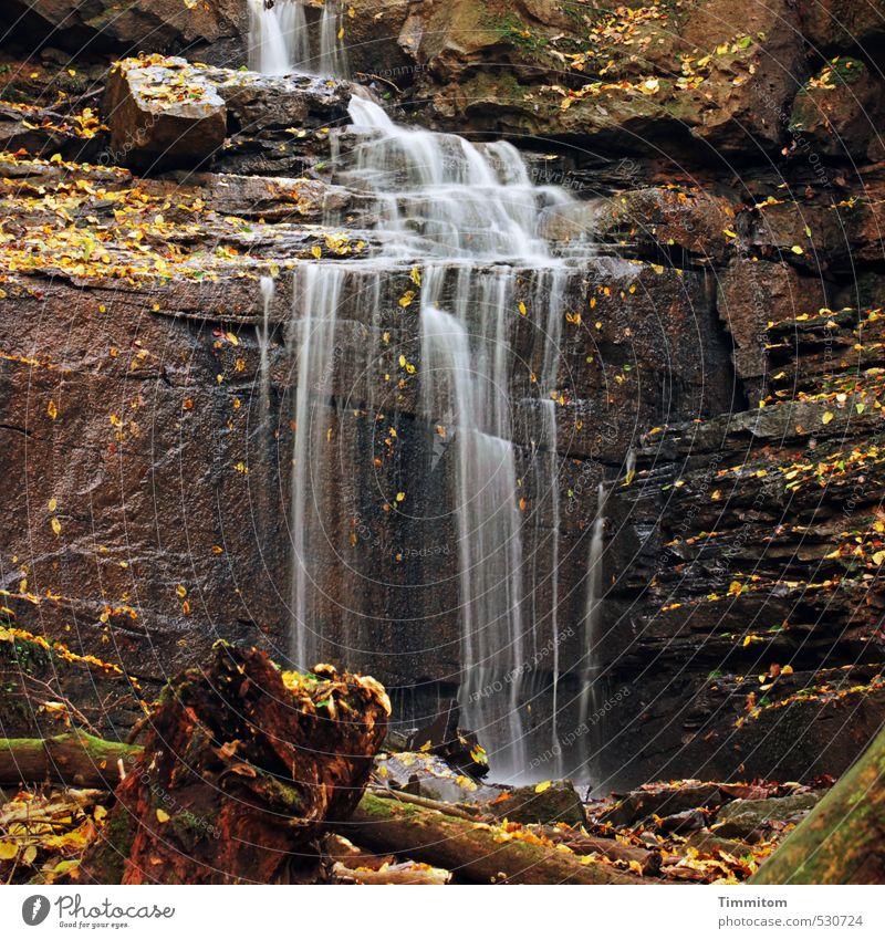 Goldener Oktober - vorbei. Umwelt Natur Urelemente Wasser Herbst Schönes Wetter Schlucht Margarethenschlucht Stein ästhetisch natürlich braun gold Gefühle