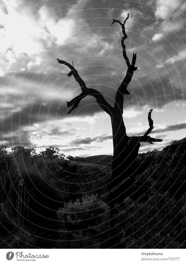 totes leben Natur alt Himmel Baum Wolken dunkel Tod Landschaft bedrohlich dünn tief morsch Karijini Nationalpark