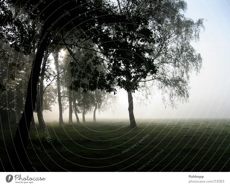 Morgennebel Nebel Phantasielandschaft Baum Wiese Feld Nebelfeld Stil ruhig Morgendämmerung nebelgras friedlich