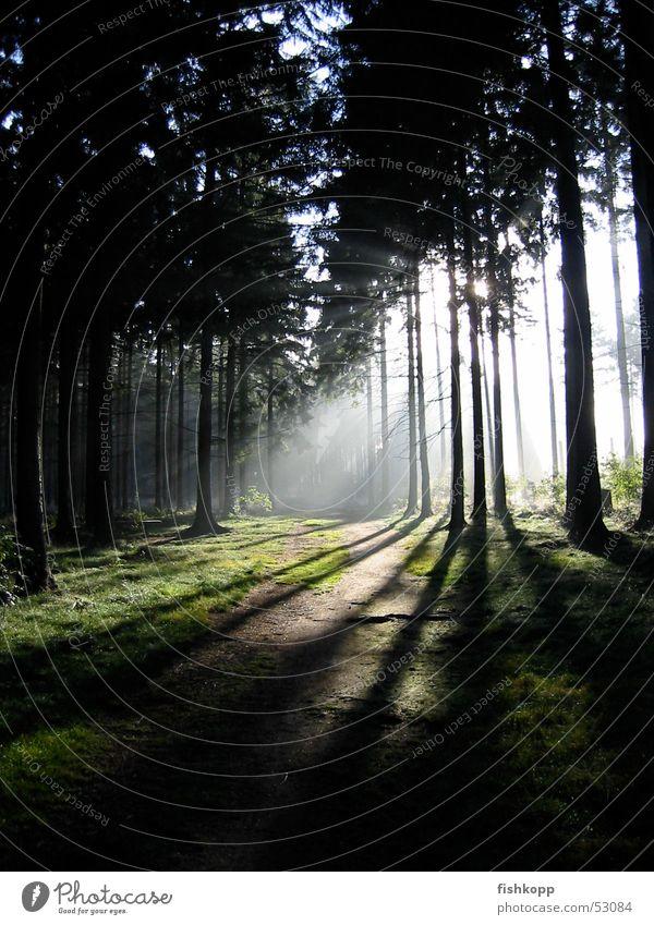 Lichteinfall ruhig Wald Energiewirtschaft Fußweg Waldlichtung Märchenwald Waldspaziergang