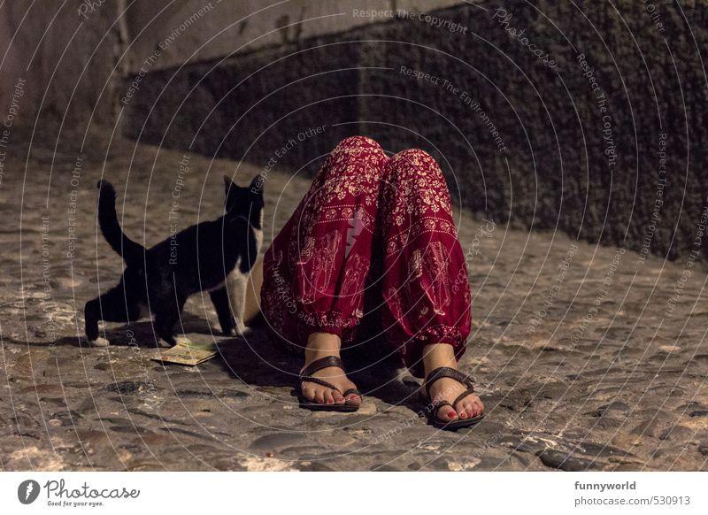 une chatte andalou Frau Erwachsene Beine Fuß 1 Mensch Hose Sandale Katze Tier Kopfsteinpflaster schlafen dunkel rot Freundschaft Zusammensein Tierliebe