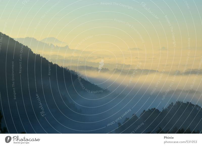 Morgennebel am Brand Natur Landschaft Wassertropfen Wolken Horizont Sonnenaufgang Sonnenuntergang Nebel Wald Hügel Berge u. Gebirge Sächsische Schweiz
