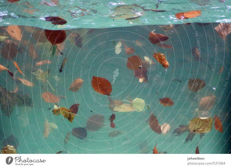 Herbstregen Wasser Baum Blatt Herbstlaub Wellen Teich Schwimmbad Schwimmen & Baden fallen tauchen dreckig Flüssigkeit kalt blau braun mehrfarbig gelb rot türkis