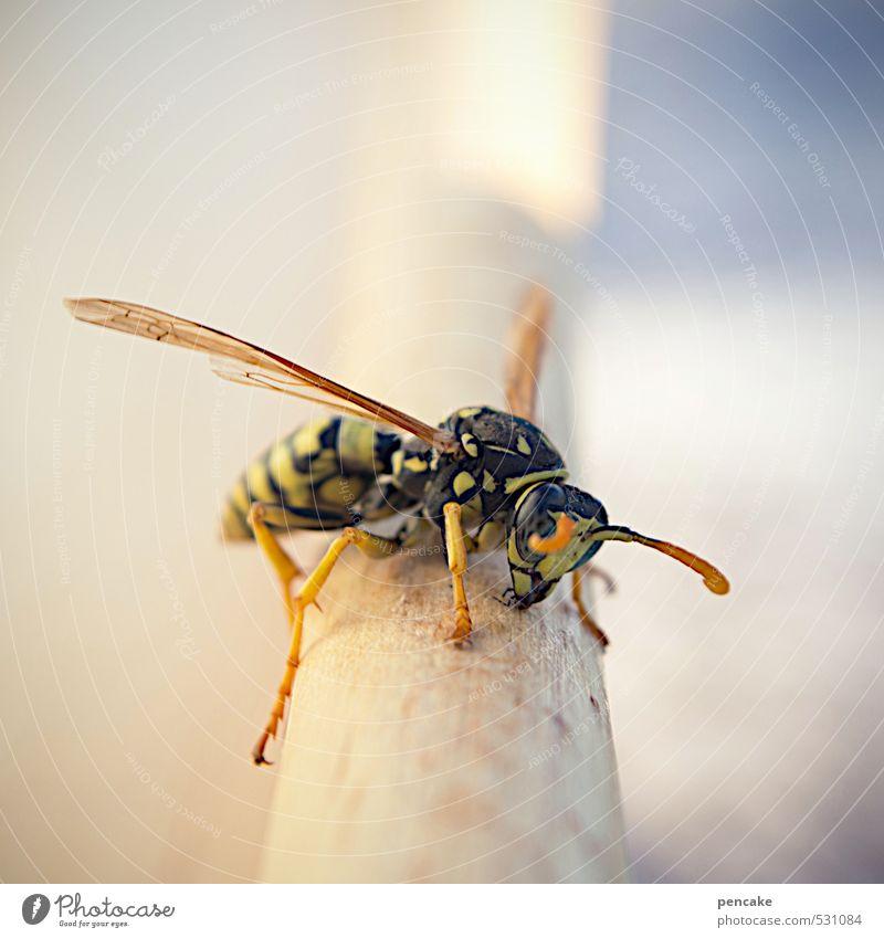piekst | gewaltig Natur Tier 1 Zeichen Gefühle stechen Schmerz Wespen Gift Aggression Insekt gefährlich Farbfoto Außenaufnahme Makroaufnahme Textfreiraum oben
