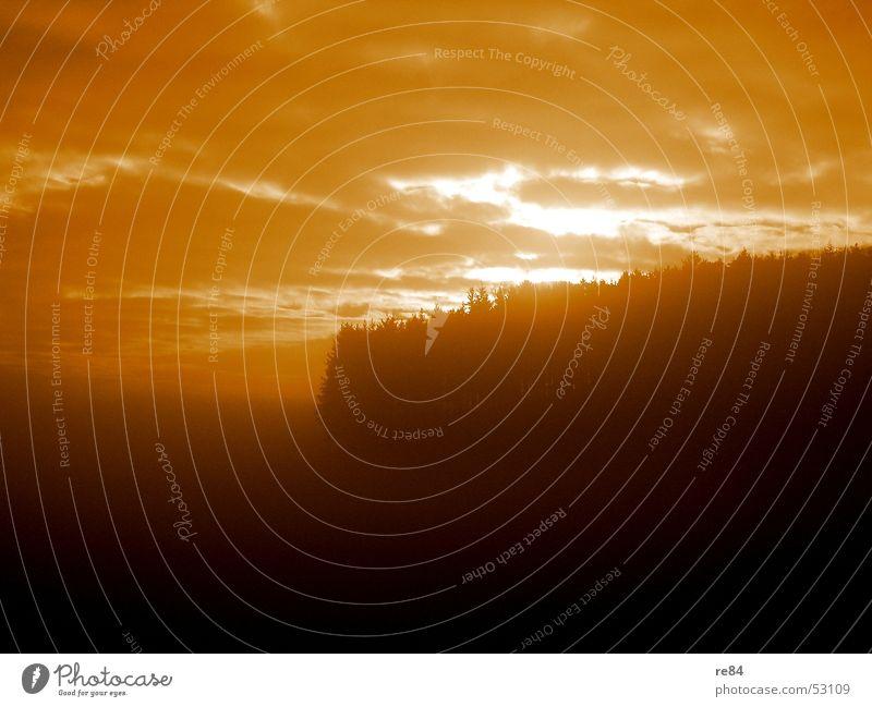 Mossautal - Impressionen 3 Baum Sonne schwarz Wald dunkel Holz orange Treppe Märchen Odenwald Nibelungen