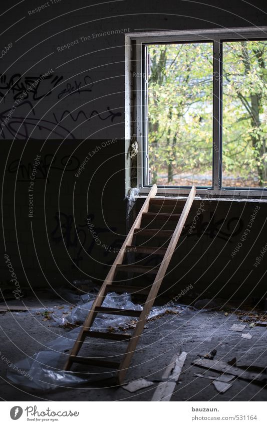 ausweg suchen. grün Baum Einsamkeit Wald dunkel Fenster Wand Mauer Freiheit Holz Stein Garten Kraft Erfolg Sträucher Hoffnung