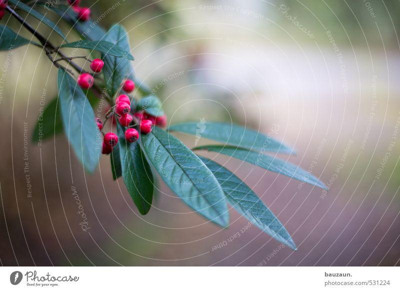 tschuldigung. Garten Gartenarbeit Landwirtschaft Forstwirtschaft Herbst Pflanze Baum Sträucher Blatt Grünpflanze Park entdecken Wachstum grün rot ästhetisch
