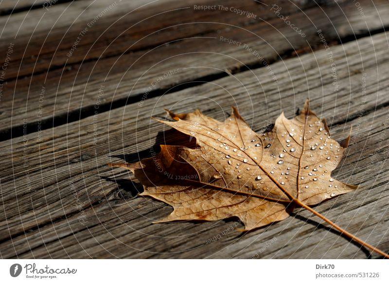 Nach dem Schauer alt weiß Wasser ruhig Blatt schwarz Herbst Tod Wege & Pfade grau Holz natürlich liegen braun Regen glänzend