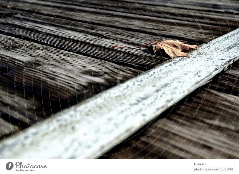 Nature morte Umwelt Herbst Pflanze Baum Blatt Ahornblatt Park Montreal Kanada Nordamerika Wege & Pfade Holzweg Steg Balken Holzbrett Stahlträger Metall alt