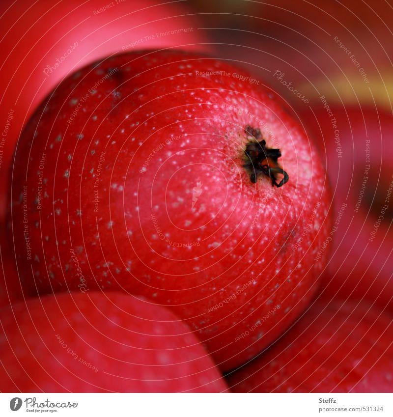 an apple a day Äpfel Apfel Apfelernte Bio Frucht Herbst Obst dunkelrot Gartenobst Obstgarten Vitamin Obsternte herbstlich Herbstgarten Herbstgefühle