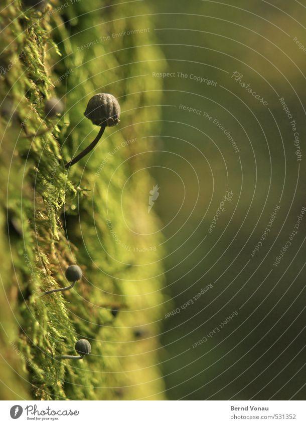 Subkultur Natur grün Pflanze Baum schwarz Wald Umwelt klein Wachstum niedlich rund Baumstamm Stengel Moos feucht Pilz