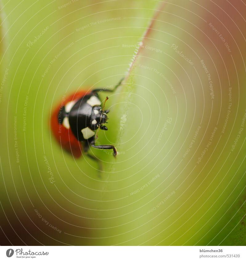 Happy Birthday sally2001! grün rot Tier schwarz klein Glück natürlich Zufriedenheit sitzen Wildtier laufen Fröhlichkeit Lebensfreude rund Punkt Hoffnung
