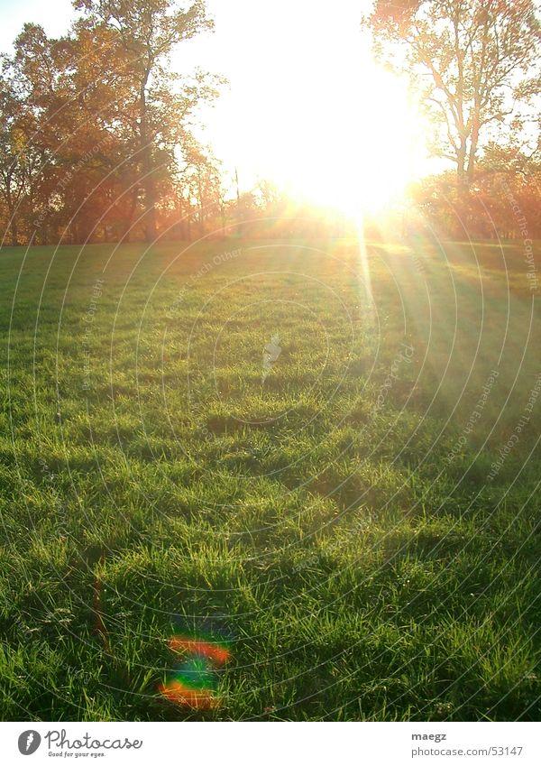 Shiny Herbst Gras Park Luft blenden Licht Physik Baum herst Sonne orange Natur Wärme Außenaufnahme