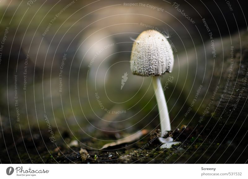 Hut mit Federn Natur Pflanze Erde Herbst Moos Wildpflanze Pilz Wald Glück Tapferkeit Kraft Schutz Gelassenheit geduldig ruhig Farbfoto Außenaufnahme
