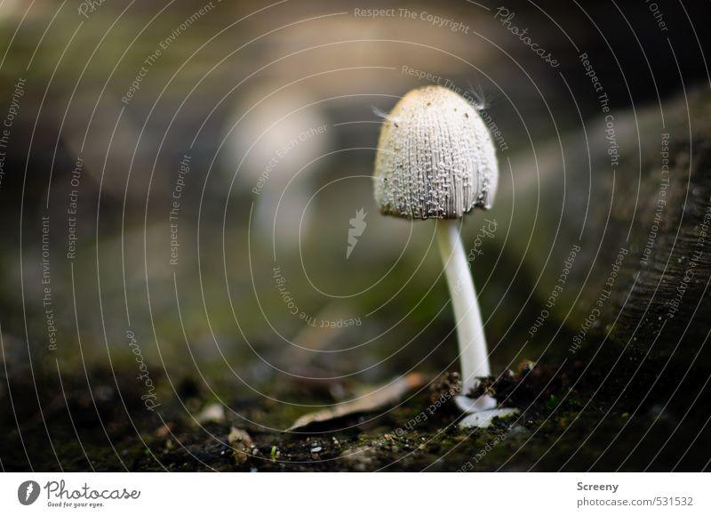 Hut mit Federn Natur Pflanze ruhig Wald Herbst Glück Kraft Erde Schutz Gelassenheit Moos Pilz geduldig Wildpflanze Tapferkeit