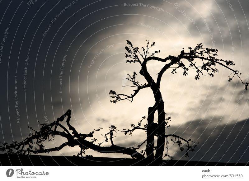 Pflanze | Drama, Baby Umwelt Natur Himmel Gewitterwolken Sonnenlicht schlechtes Wetter Sturm Baum Blatt Grünpflanze bedrohlich dunkel schwarz Endzeitstimmung