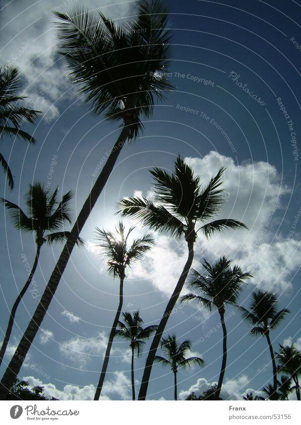 Palmsky Himmel Ferien & Urlaub & Reisen Sonne Sommer Strand Wolken Palme Kuba