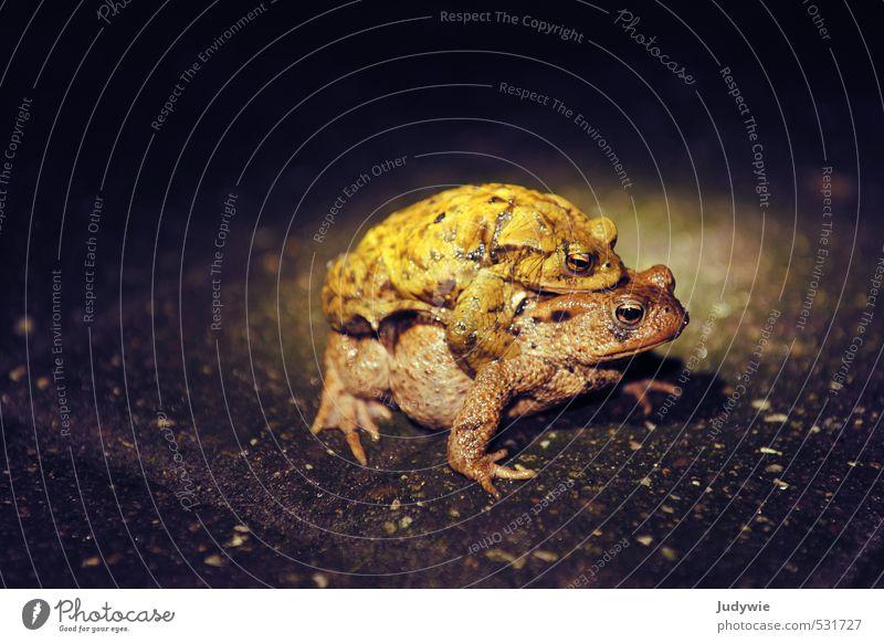 Huckepack Natur Ferien & Urlaub & Reisen Tier Umwelt Straße Liebe Herbst Wege & Pfade Frühling Zusammensein PKW Regen Erde Verkehr Tierpaar Wildtier
