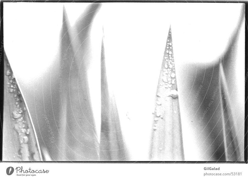 Grasspitzen Natur Pflanze Umwelt Wassertropfen nass Seil Grünpflanze Unschärfe selbst entwickelt