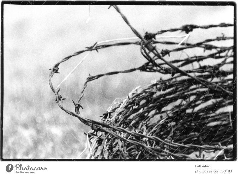 Stacheldraht alt weiß schwarz außergewöhnlich Angst trist authentisch gefährlich bedrohlich historisch Zaun gruselig Schmerz Draht Stachel Spiekeroog