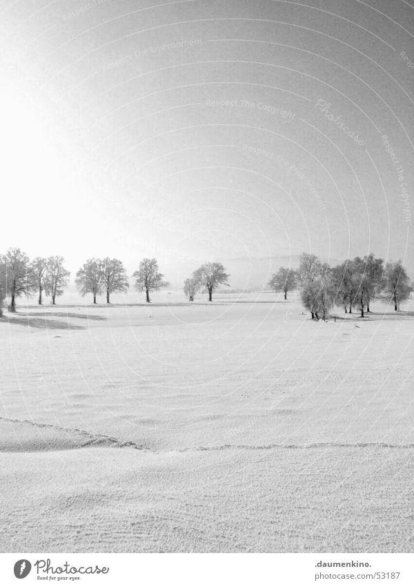 Kreis der Bäume Mensch Natur alt Himmel weiß Baum Sonne Winter ruhig schwarz Wald kalt Schnee Landschaft hell Wetter