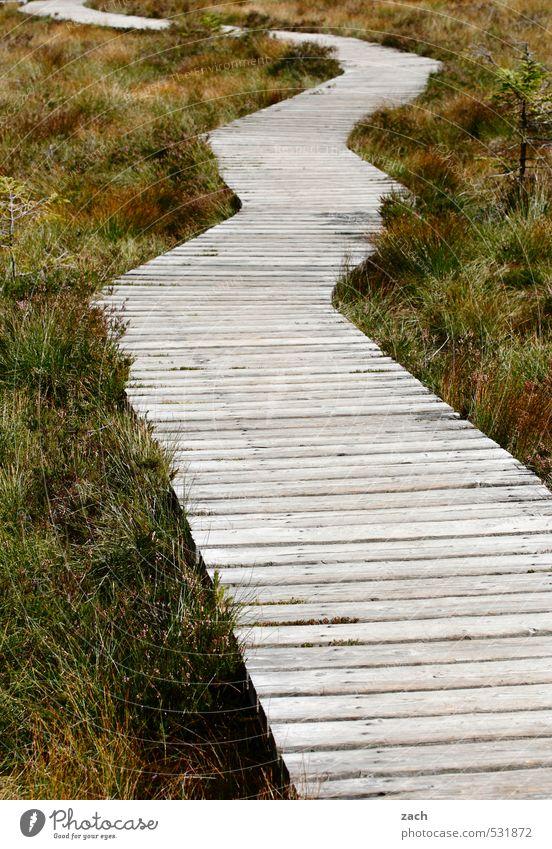 Run Boy Run Natur Ferien & Urlaub & Reisen grün Pflanze Erholung Wiese Herbst Wege & Pfade Gras Freiheit grau Holz wandern Ausflug Abenteuer Fußweg