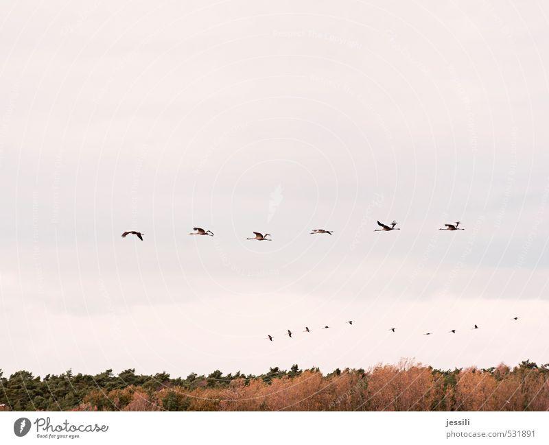 Arrays Himmel Natur Sommer Baum Landschaft Gefühle Herbst Bewegung Menschengruppe Vogel fliegen Zusammensein Geschwindigkeit Beginn einfach Abenteuer