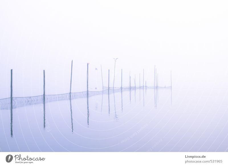 Sumpfsee 2 Natur blau grün weiß Wasser Herbst See Nebel Seeufer violett schlechtes Wetter Seenplatte