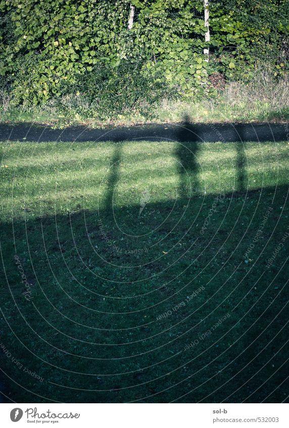 Mensch Natur grün Baum Einsamkeit Leben Herbst Gras Wege & Pfade Stimmung Park Feld stehen Sträucher beobachten Brücke