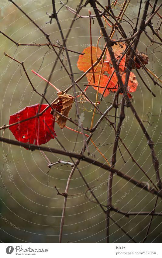 mitgehangen, mitgefangen Natur Pflanze Baum Blatt Umwelt Leben Herbst Wege & Pfade Garten Park Kommunizieren Vergänglichkeit Wandel & Veränderung Platzangst