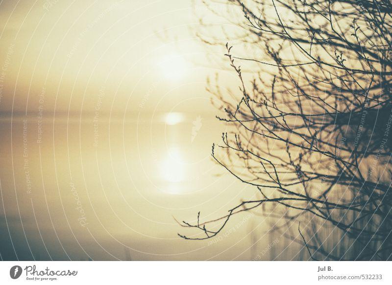 See Natur Wasser Sonne Baum Freude See Stimmung Seeufer