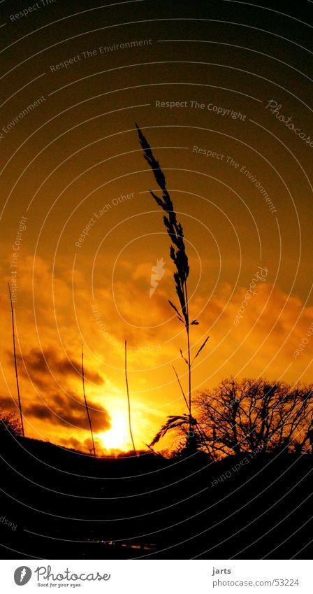 Einsam....... Himmel Wolken Gras Halm Sonnenuntergang