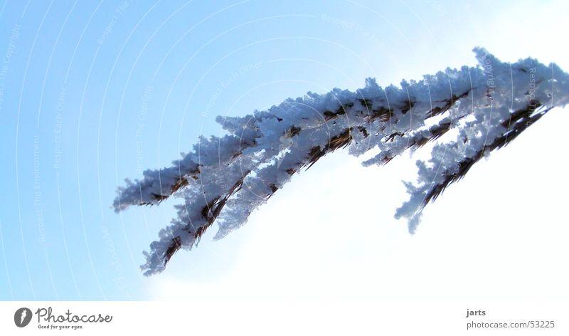 Schneefell Himmel blau Winter Schnee Halm