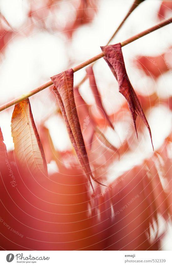 rotrotrot Natur Pflanze Blatt Umwelt Herbst natürlich Sträucher