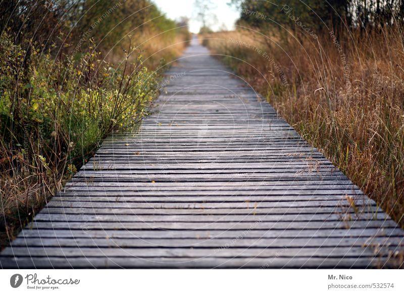 loslaufen Ferien & Urlaub & Reisen Ausflug Ferne Freiheit wandern Umwelt Natur Landschaft Herbst Sträucher Moos Moor Sumpf ruhig Holzweg Unendlichkeit geradeaus