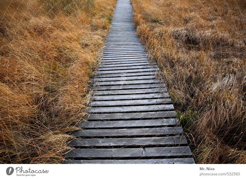 geradeaus Ferien & Urlaub & Reisen Ausflug Ferne Freiheit wandern Umwelt Natur Landschaft Pflanze Gras Moor Sumpf Idylle Einsamkeit Hohes Venn vertrocknet