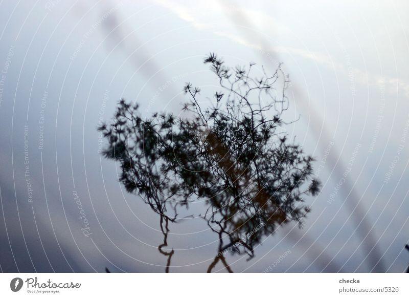 spiegelung Wasser Baum Pflanze See Zweig