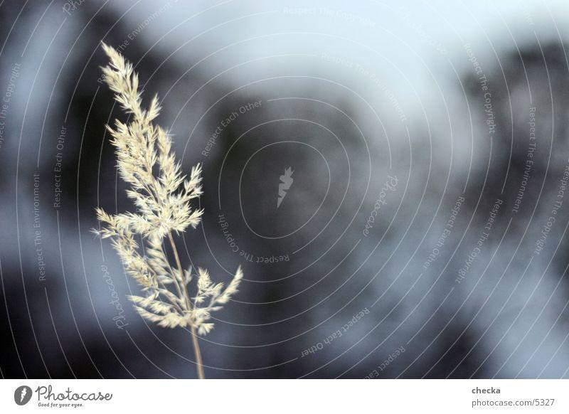 gras Gras Pflanze See Makroaufnahme Natur