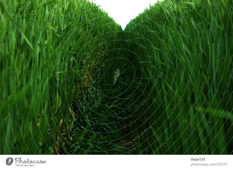Tunnelblick in grün Natur Himmel Pflanze Ferien & Urlaub & Reisen Blatt Mauer Wege & Pfade Landschaft Feld Horizont Geschwindigkeit Ende natürlich Stengel