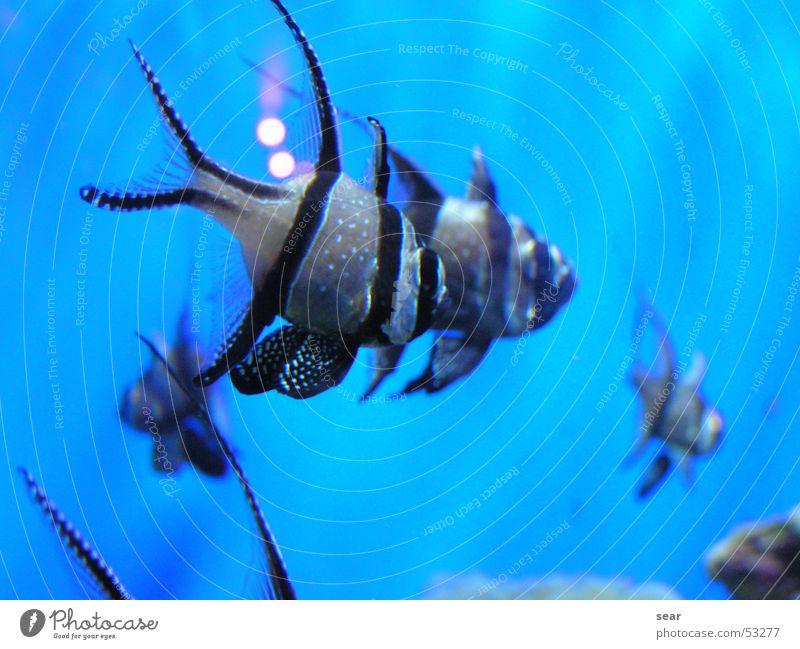 Fischi Zoomeffekt Aquarium blaues meer Wasser