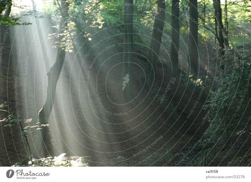 Lichtschleier Nebel Wald Sonnenaufgang Baum Morgen