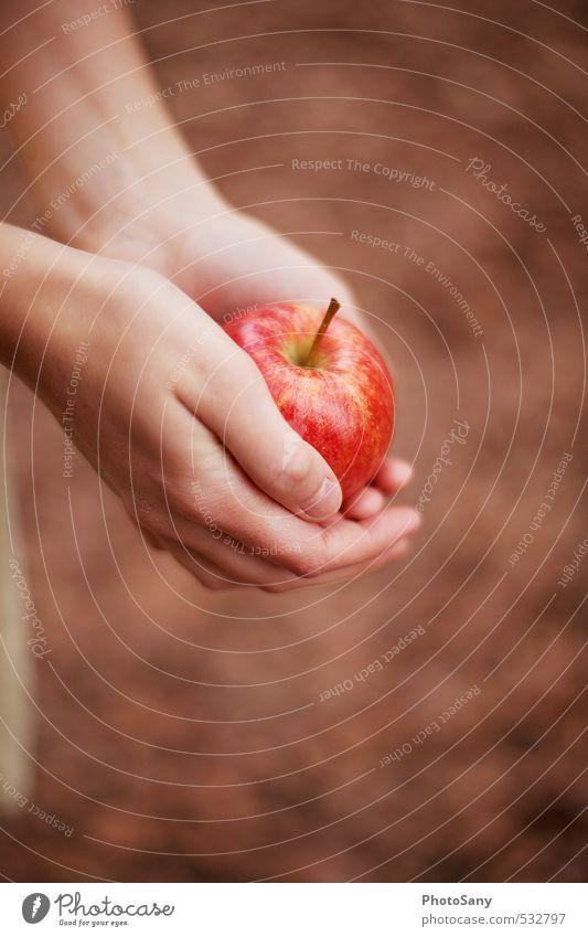 Ist es Schneewittchen? Apfel Haut Hand Finger 1 Mensch lecker schön braun rot Märchen herbstlich Farbfoto Außenaufnahme Tag Unschärfe Vogelperspektive